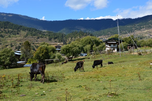 Landschaft in Ura, Bumthang-Region